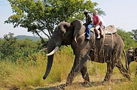 Elephant Whispers safari venue and elephant interaction center, Hazyview, Mpumalanga, South Africa