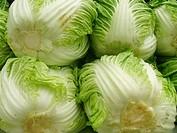 Chinese cabbage, Acelga, São Paulo, Brazil
