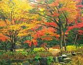 A stream surrounded by Autumn colours, Shizuoka Prefecture, Japan