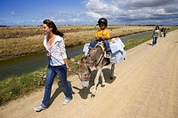 France, Vendee, Ile de Noirmoutier, donkey trek in the salt marshes