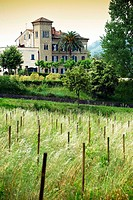 An old farm with grapes field. campania. italy. europe.