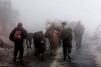 India, Arunachal Pradesh State, carrying goods by horses to cross the Sela Pass altitude 13700 ft