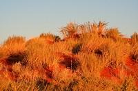 Bewachsene Sanddüne im Sonnenuntergang