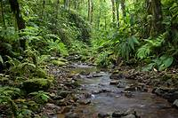 Tropical mountain stream  Photographed in Panama