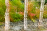 Blurred abstract of stone wall with birch trees growing from it & Fireweed wildlfowers