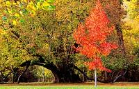 France, Loir et Cher, Cheverny, castle park