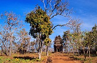 Cambodia, Preah Vihar Province, Koh Ker, site listed as World Heritage by UNESCO, capital city of Angkor Empire in 10th century with King Jayavarman I...