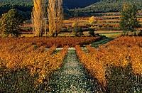 France, Vaucluse, Luberon, landscape near Saint Saturnin les Apt