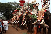 India, Kerala, parade of elephants for a temple festival