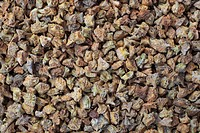 medicinal plant Tribulus, fruits or seeds of Tribulus terrestris, Bai Ji Li