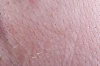 Pig Sus scrofa domestica skin.