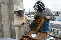 Pollution detection using bees. Researcher and beekeeper Minh_Ha Pham Delegue and Jean Paucton Delegue using honey bees Apis mellifera to detect pollu...