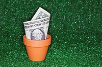 Dollar bill growing in pot, Close_up