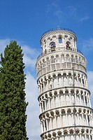 Cypress tree and Leaning Tower of Pisa, Toscana, Italy