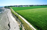 France, Charente Maritime, Ile de Re, near La Flotte en Re village, cycling aerial view
