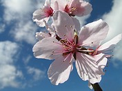 Close up of pink flower with sky and clouds in background