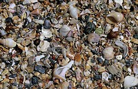 Shells _ Shell Beach _ Jeffrey´s Bay, South Africa
