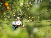 Man With Juice Reading In Orange Grove