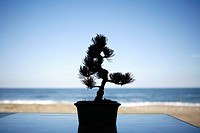 Silhouette of potted plant