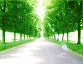 View of sunlight amid roadway and trees