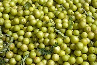 Indian Gooseberry Emblica officinalis pile of harvested fruit, Tamil Nadu, India