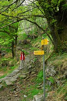 young woman on path between trees, yellow Swiss signpost, Ticino, Switzerland