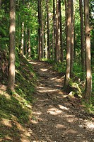 Japan, Wakayama Prefecture, Kumano Kodo, Footpath passing through forest