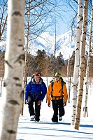 Two men walking between birch trees through the snow, Hokkaido, Japan, Asia