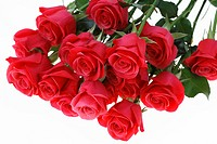 Bunch of red roses on white background, close_up