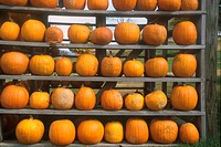 Tennessee Pumpkin harvest store _ Great Smoky Mountains, Tennessee, USA
