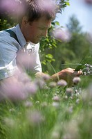Farmer in bed of chives, biological dynamic bio_dynamic farming, Demeter, Lower Saxony, Germany