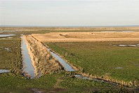 Coastal freshmarsh, phragmites reedbed, drainage dykes and sea wall, Salthouse, Norfolk, England, winter
