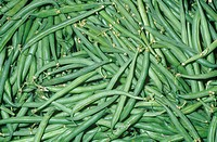 French Green Beans Phaseolus vulgaris.