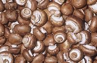 Mushroom variety Cremini Agaricum bisporus