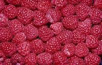 Raspberries Rubus idaeus