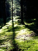 Sunlight in a forest.