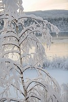 A tree covered in snow by a river.
