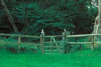 Dead Eastern Grey Squirrels, staked to gate as decoy to attract others, to shoot them, England