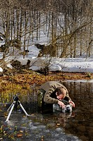 Photographer, working in icy water of mountain pond, photographing Common Frog Rana temporaria spawning and frogspawn, Italy, winter