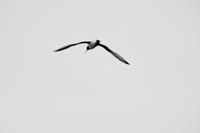 Artistic image of a flying bird, Sweden