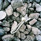 Fish bones on stones.