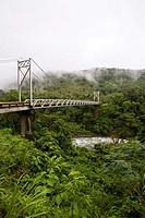 Misty forest surrounding San Isidro de Pe–as Blancas Suspension Bridge over Rio Pe–as Blancas in Costa Rica