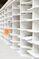Rows of office cubby holes with a flower sticking out of one