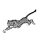 Pouncing Leopard, Black Ink Illustration