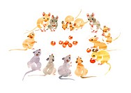 Illustration of mice eating and looking at cherries, white background