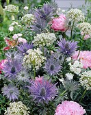 Allium, Eryngium zabelii Donard Variety, Paeonia