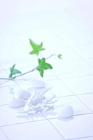 Plant and white shells on floor, soft focus