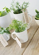 Herb cuttings in coffee cups