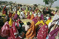 india, camels market, rajastan