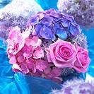 Summer, Rosa Aqua, Allium, Hydrangea
